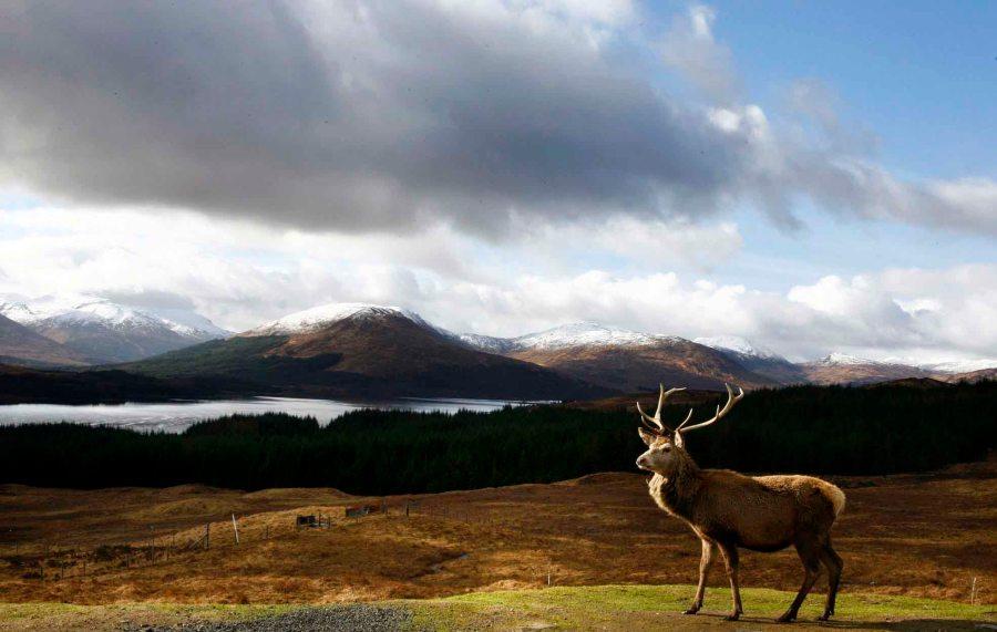 Stag Overlooks Loch Tulla
