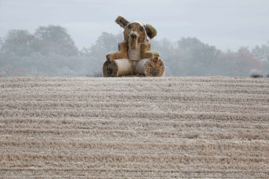 Hay Bales as a giant rabbit near Drymen