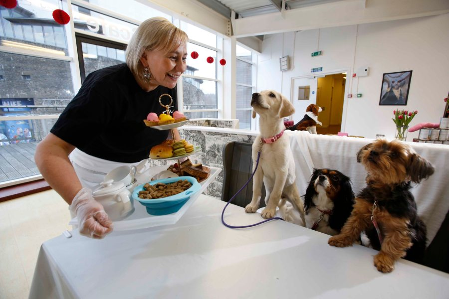 Laura Davies in her recently opened Dug Café - for dogs and their owners - at Lomond Shores.