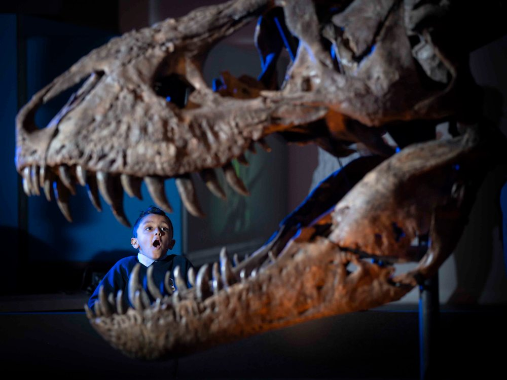 Trix the Tyrannosaurus rex ready to meet Scottish audiences at the Kelvin Hall in Glasgow